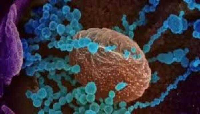 Delta Plus Virus: കേരളം അടക്കമുള്ള 3 സംസ്ഥാനങ്ങൾക്ക് കേന്ദ്രത്തിന്റെ ജാഗ്രതാ നിർദ്ദേശം