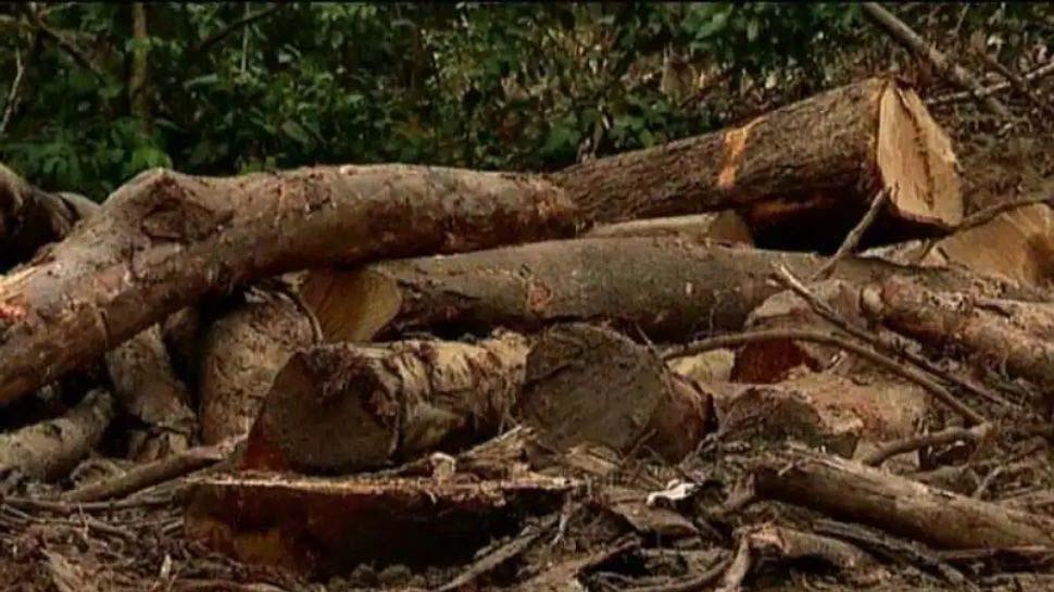 Forest robbery case: മുട്ടിൽ മരം മുറിക്കേസിലെ പ്രതി മുൻ വനം മന്ത്രി കെ രാജുവിന്റെ സ്റ്റാഫിനെ ഫോണിൽ വിളിച്ചതിന് സ്ഥിരീകരണം
