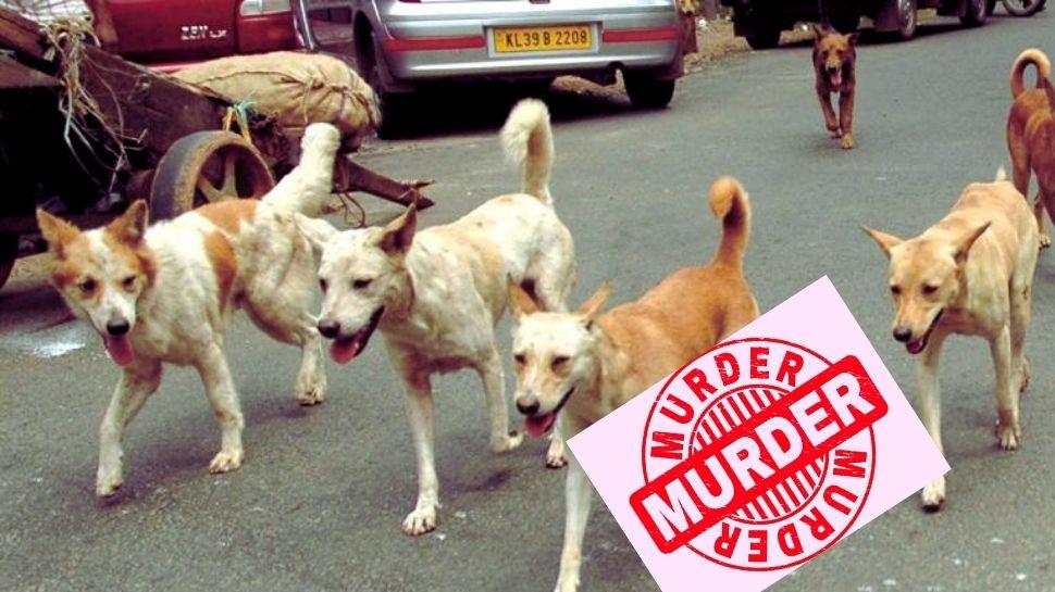 Thrikkakara Dog Killing: കണ്ടെത്തിയത് കുഴിച്ചിട്ട നിലയിൽ 30ലതികം നായകളുടെ മൃതദേഹം,തൃക്കാക്കരയിലെ കുറ്റവാളികൾക്ക് ഉദ്ദേശം എന്തായിരുന്നു?