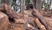 Forest robbery case: മുട്ടിൽ മരംമുറിക്കേസ് അന്വേഷണത്തിന്റെ മേൽനോട്ട ചുമതല ക്രൈംബ്രാഞ്ച് എഡിജിപി ശ്രീജിത്തിന്