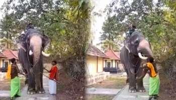 നിലവ് നിർത്തി നെറ്റിക്കടിക്കുന്നു: ആനക്ക് പാപ്പാൻറെ ക്രൂര മർദ്ദനം Viral Video