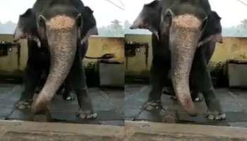 viral video: ബോളിവുഡ് ഹിറ്റ് ഗാനത്തിന് ചുവടുവയ്ക്കുന്ന ആന, വീഡിയോ കാണാം