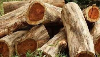 Forest robbery case: മുട്ടിൽ മരംമുറിക്കേസ് അന്വേഷണത്തിനുള്ള ക്രൈംബ്രാഞ്ച് സംഘം രൂപീകരിച്ചു