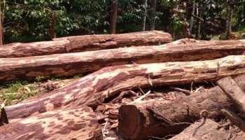 Forest robbery case: വിവാദ ഉത്തരവിന്റെ മറവിൽ മുറിച്ച് കടത്തിയത് 15 കോടിയുടെ മരങ്ങൾ; ഉദ്യോഗസ്ഥർക്ക് വീഴ്ച സംഭവിച്ചതായി റിപ്പോർട്ട്