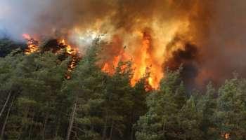 Wildfire in Turkey; മൂന്ന് മരണം, 1,500 ഏക്കർ കൃഷി ഭൂമി കത്തി നശിച്ചു