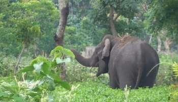 Elephant Attack : ഇടുക്കിയിൽ കാട്ടാന യുവതിയെ ആക്രമിച്ച് കൊലപ്പെടുത്തി; ഭർത്താവ് ഓടിരക്ഷപ്പെട്ടു