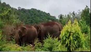 Wild Elephant : ഇരിട്ടിയിൽ ദമ്പതികൾക്ക് നേരെ കാട്ടാന ആക്രമണം; ഭർത്താവ് മരിച്ചു; ഭാര്യ അതീവ ഗുരുതരാവസ്ഥയിൽ