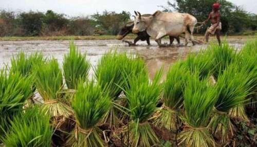PM Kisan Samman Nidhi: മോദി സർക്കാർ ഈ കർഷകർക്കും നൽകും 2000 രൂപ, അറിയാം..